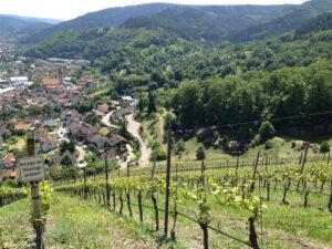 Wijngaard_Baden
